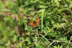 Butterfly sits on a flower. Insect / Butterfly sits on a flower Stock Photos