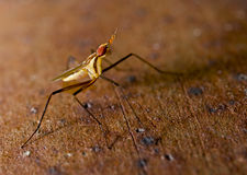 Insect cactusfly macro shot Stock Images