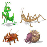 Insect Cartoon Character Vector Illustration Pack Five Include Mantis, Stick Insect, Cockroach and Dung Beetle Stock Photography