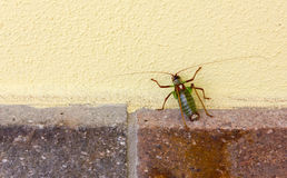 Insect Climbing a Yellow Wall Stock Photos