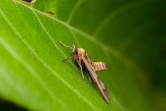 Insect. Close up insect on green leaf Stock Photos