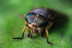 Insect, Close Up, Macro Photography, Photography Royalty Free Stock Photo