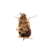Insect cockroach pest bug Royalty Free Stock Photos