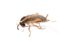 Insect cockroach pest bug Royalty Free Stock Image