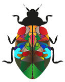 Insect cockroach Royalty Free Stock Photography