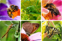 Insect collage Royalty Free Stock Images