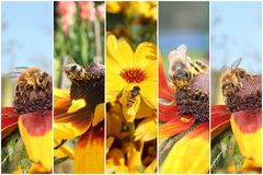 Insect collage Stock Photos