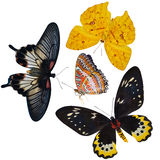Insect collection of butterflies isolated. On white background stock image
