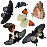 Insect collection. Of butterflies isolated on white background stock images