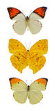 Insect collection of butterflies. Isolated on white background stock photos