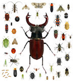 Insect collection Stock Photo
