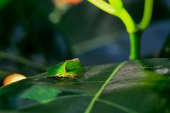 Insect. Color and shape vary according to the nature Stock Photo
