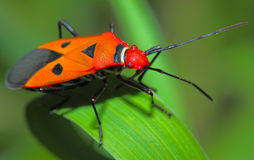 Insect. A colourful insect on a green leaf Stock Image