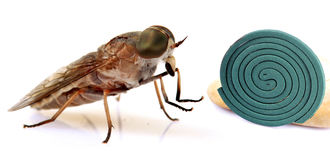 Insect control Royalty Free Stock Photography
