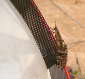 Insect crawling on the edge of the tent. Stock Photography