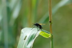 Insect, Damselfly, Dragonfly, Invertebrate