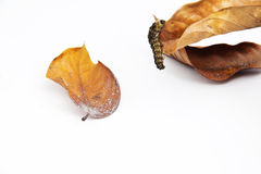 Insect dat op het blad beklimt Royalty-vrije Stock Afbeeldingen