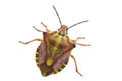 Insect dat op wit wordt geïsoleerdn stock foto