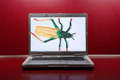 Insect in de computer Royalty-vrije Stock Afbeelding