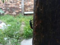 Insect in de Tuin royalty-vrije stock foto's
