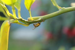 Insect in de zomer Royalty-vrije Stock Foto's