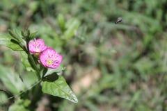 Insect die aan bloem vliegen stock afbeelding