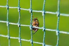 Insect die het net beklimmen royalty-vrije stock fotografie