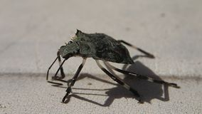 Insect die zich een weinig bewegen stock videobeelden