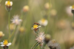 Insect. Is doing swarm flower  grass Royalty Free Stock Photography