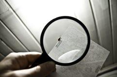 Insect door vergrootglas Stock Afbeelding