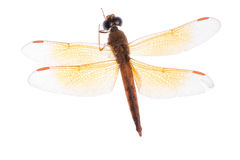 Insect dragonfly Stock Photo