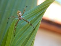 Insect, Dragonfly, Invertebrate, Macro Photography royalty free stock photos