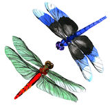 Insect dragonfly set in a watercolor style isolated. Aquarelle dragonfly for background, texture, wrapper pattern, frame or border vector illustration