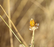Insect on dried flower Stock Photos