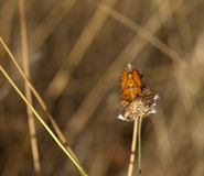 Insect on dried flower. Spanish countryside Stock Photos