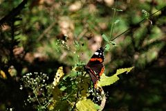 Insect, Ecosystem, Butterfly, Moths And Butterflies Royalty Free Stock Photography