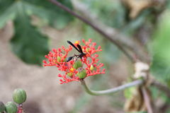 Insect eet. Insect resting on plant and eating from the flower, picture taken in Uganda, Jinja Sources of the Nile stock photography