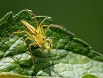 Insect en blad Royalty-vrije Stock Afbeelding