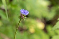 Insect en bloem Royalty-vrije Stock Afbeeldingen