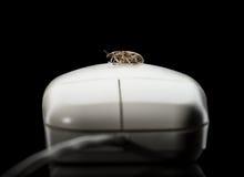 Insect en computermuis Stock Afbeeldingen