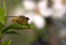 Insect, Fauna, Macro Photography, Close Up Stock Photography