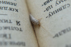 Insect feeding on paper - silverfish Stock Image