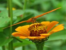 Insect, Flora, Nectar, Flower Royalty Free Stock Image