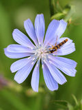 Insect on a flower Stock Images