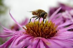 An Insect on a Flower. An insect on a blooming flower stock image