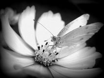 The Insect Royalty Free Stock Photography