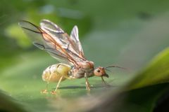 Insect is on the flower in garden. stock photos