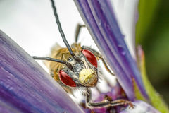 Insect between flower leaves Royalty Free Stock Photos