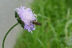 Insect, Flower, Nectar, Pollinator Stock Images