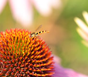 Insect on the flower Stock Photos